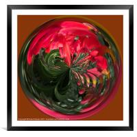 Spherical Paperweight Flowers and colours, Framed Mounted Print