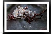 Hawthorn Blossom Textures, Framed Mounted Print