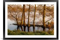 Trees in the Shallows, Framed Mounted Print