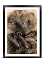 All Curled Up, Framed Mounted Print