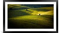 Greens and golds, Framed Mounted Print