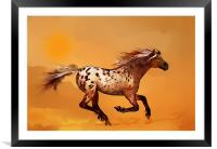 An Appaloosa called Ginger, Framed Mounted Print