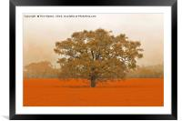 Autumn Tree In A Field Of Orange, Framed Mounted Print