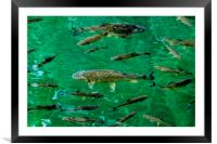 Fish Pool, Framed Mounted Print