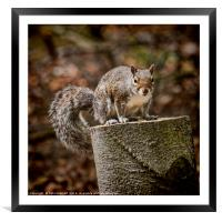 Gimme a Nut, Framed Mounted Print