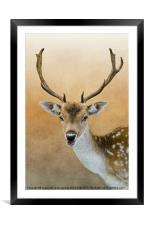 Fallow Deer Stag, Framed Mounted Print