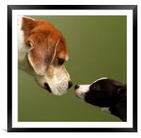 Nose To Nose Dogs 2, Framed Mounted Print