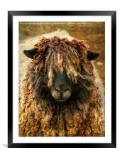 Because Ewe Are Worth It, Framed Mounted Print