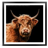 Highland Cow 2, Framed Mounted Print