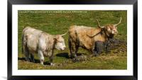 Two Coo's, Framed Mounted Print