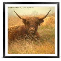 Smiling Highland Cow, Framed Mounted Print