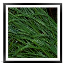 Grass and Rain, Framed Mounted Print