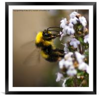 Buzzzzzzzzzzing Around, Framed Mounted Print