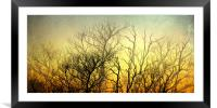 Illuminated Forest, Framed Mounted Print