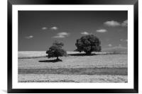 Trees hammered by sun, Framed Mounted Print