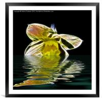 Watery Petals, Framed Mounted Print