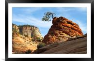 Rock and Tree. National park Zion. Utah, Framed Mounted Print