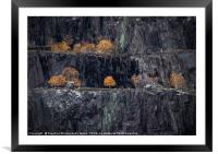 Autumn Tree at Nant Peris Quarry Landscape view, S, Framed Mounted Print