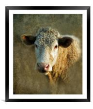 Young Bull, Framed Mounted Print