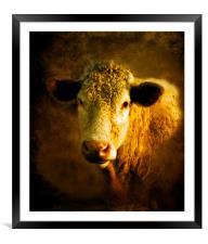 Young Bull.., Framed Mounted Print
