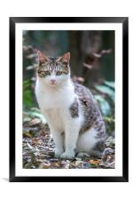 Japanese Cat, Framed Mounted Print