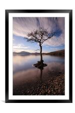 Lone tree in water, Framed Mounted Print