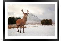 Deer Stag, Framed Mounted Print