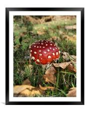 I'm a little Toadstool, Framed Mounted Print