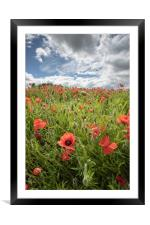 Devon Poppies, Framed Mounted Print