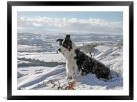 Snow Collie, Framed Mounted Print