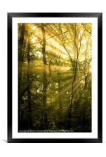 Sunrays Through the Trees, Framed Mounted Print