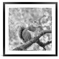 Squirrel in a Tree - Black and White, Framed Mounted Print