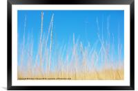 Golden Grasses on a Sunny Day, Framed Mounted Print