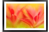 Red Plant Leaves - Abstract, Framed Mounted Print