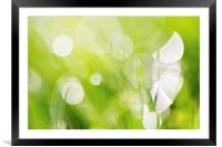 Green Abstract - Dewdrops in the Sunlit Grass 2 - , Framed Mounted Print