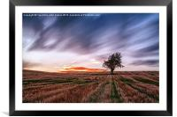 Lonely tree Landscape, Framed Mounted Print