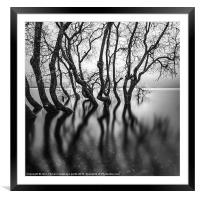 submerging trees, Framed Mounted Print