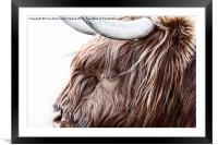 The Highland Cow, Framed Mounted Print