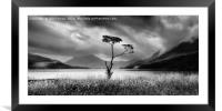 Lone tree on Buttermere, Framed Mounted Print