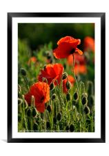 Stand tall, Framed Mounted Print