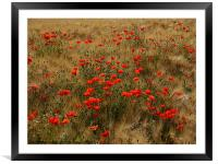 red poppy field, Framed Mounted Print