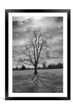 tree and shadows, Framed Mounted Print