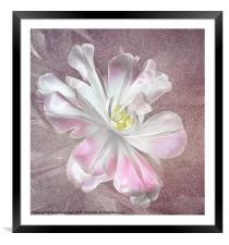 Tulip, Framed Mounted Print
