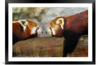 Nose to nose, Framed Mounted Print