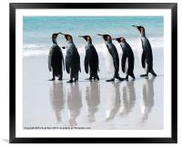 Off for a Swim, Framed Mounted Print