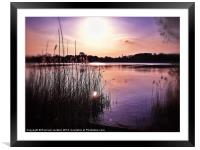 Through the reeds, Framed Mounted Print
