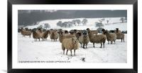 Ewe it's cold out here, Framed Mounted Print