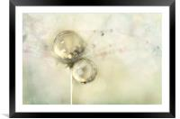 Hint of Gold, Framed Mounted Print