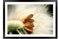 In the Breeze, Framed Mounted Print