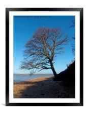 Wrabness, Essex, Tree, Framed Mounted Print